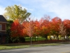 fall-colors-at-beecroft-ave-oct-2014-1