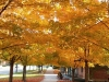 fall-colors-at-beecroft-ave-oct-2014-2