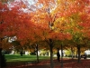 fall-colors-at-beecroft-ave-oct-2014-3