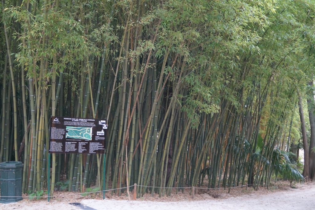 Green, yellow and black bamboo at Château de Flaugergues, Montpellier