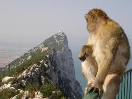 Monkey looking at the rock