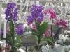 12_orchids-at-keukenhof-gardens-1