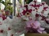 13_orchids-at-keukenhof-gardens-2