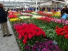19_tulips-at-keukenhof-gardens-2